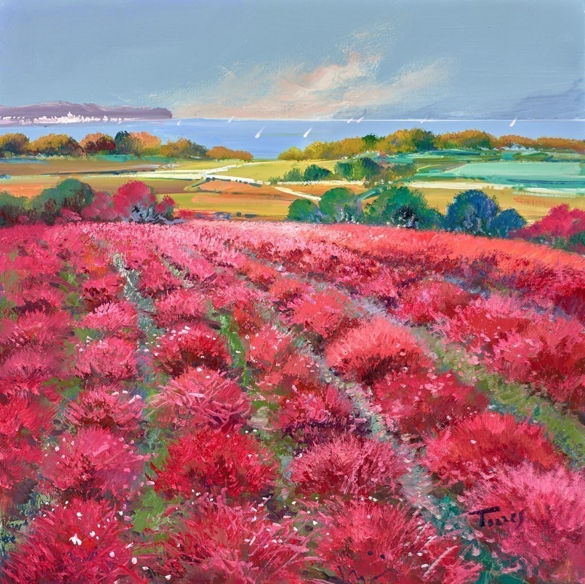 Pink Fields V
