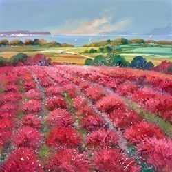 Pink Fields V by Torres -  sized 24x24 inches. Available from Whitewall Galleries